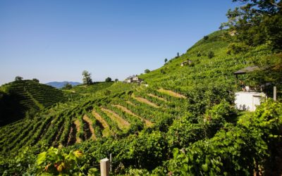 E-bikes and relax on Prosecco hills